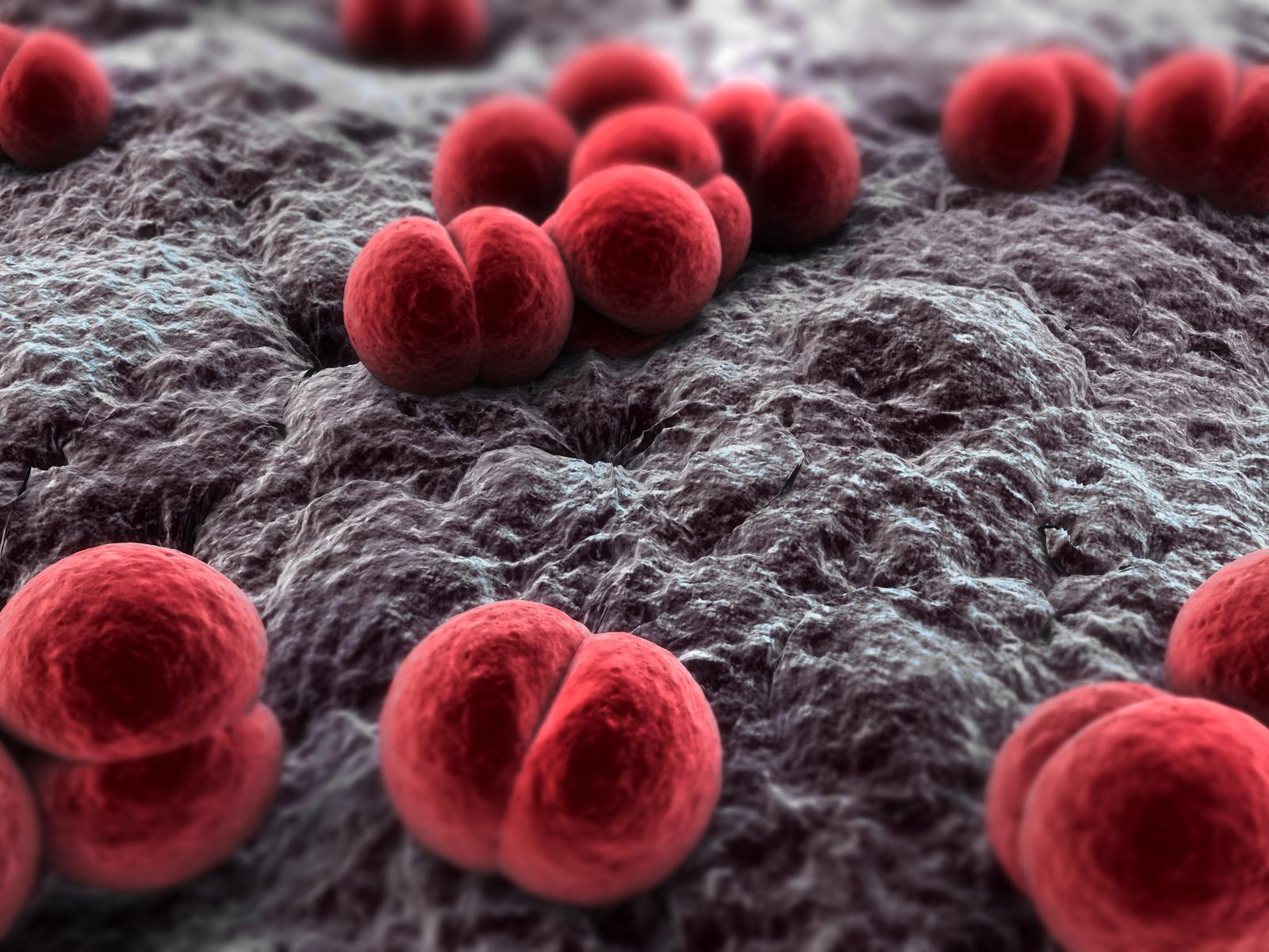 Stock Photo - close up of meningococcus bacteria